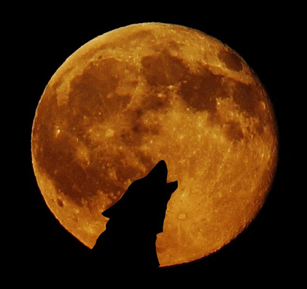 full-moon-948567_1280